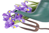 Gardening implement with watering can and iris flowers poster