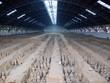 Hangar abritant les guerriers enterrés, Xian, Chine