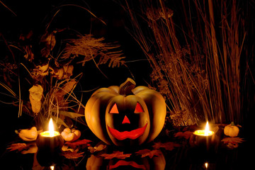 Halloween pumpkin and dry plants.