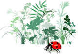 Variety of Field herbs, plants, ladybird. Traced, vector  poster