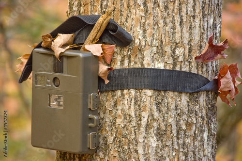 camera  attached to a tree, used by hunters to spy wild animals  - 4547324