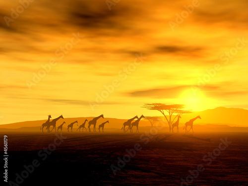 Leinwanddruck Bild Giraffen auf der Wanderung