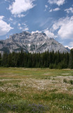 Alpine meadow in Canada poster