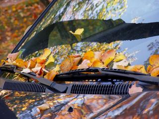 fall on the car