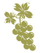 Grappolo d'uva con foglie su sfondo bianco