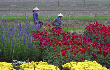Trabajadoras en campo de flores