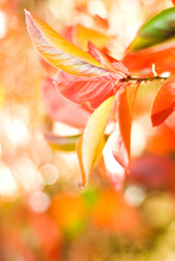 Autumn leaves on abstract blurred background (very shallow DoF,