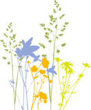 Four Field flowers, herbs and plants, traced, colors. Isolated
