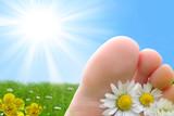 pied paquerette soleil vacances poster