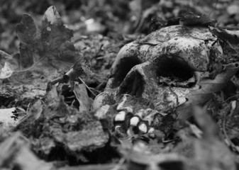 close-up of eerie skull buried in dead leaves