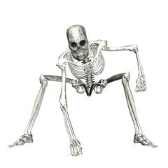 Skeleton - 5