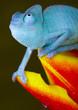 Quadro Reptile