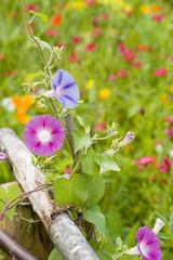 champ de fleurs 10