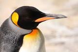 Emperor Penguin Asleep poster