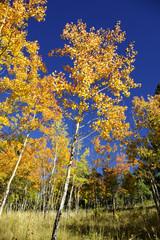 Fall 10-07 A