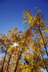 Fall 10-07 C
