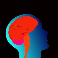 cerveau d'homme