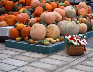 Pile of Pumpkins, mixed