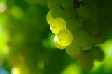 Fototapety grapes
