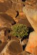 Granite rocks and tree, Matopos NP, Zimbabwe