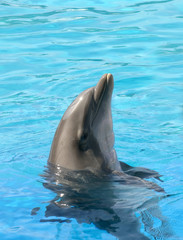 Happy Dolphin smiling