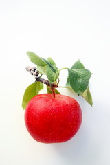 Tempting Red Apple
