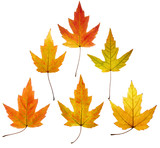 colorful maple leaves pyramid