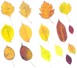 Full-size composite of autumn leaves.