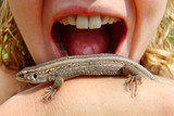 lizard in trouble poster
