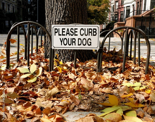Autumn leaves cover an urban sidewalk with Curb Your Dog sign