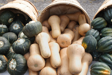 Fresh Squash for sale at farmers market