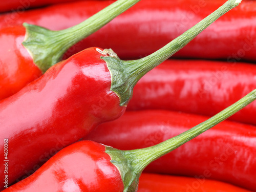 Poster Red Chili Pepper and green bell pepper