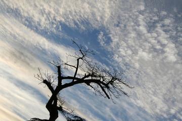 naturaleza. rama seca y nubes
