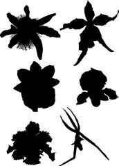 collection of orchid silhouettes