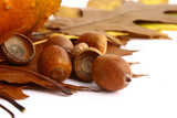 Fototapety Autumn leaves and acorns frame isolated on white.