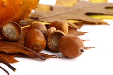 Autumn leaves and acorns frame isolated on white.