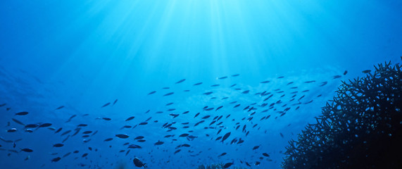 fish flow