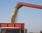 Fall Harvest:  Combining soybeans poster