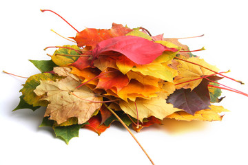 Pile of autumn leaves