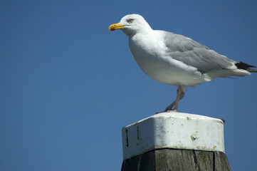 Seagull Watching