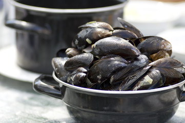 Dutch Mussels
