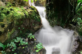 Small waterfall in a tropical rainforest poster