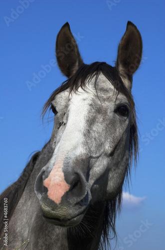 Poster Ezel cheval n°3