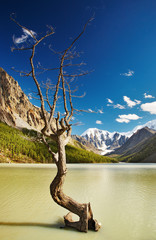 Mountain landscape with lake and dead tree