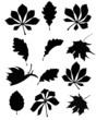 Herbstblätter Silhouetten