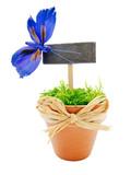 pot de mousse avec pancarte et papillon bleu poster