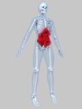 anatomie mit bauchschmerzen poster