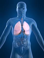 menschliche anatomie mit lunge