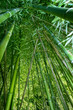 obraz - bamboo wide angle