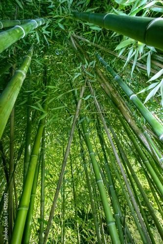 bamboo wide angle